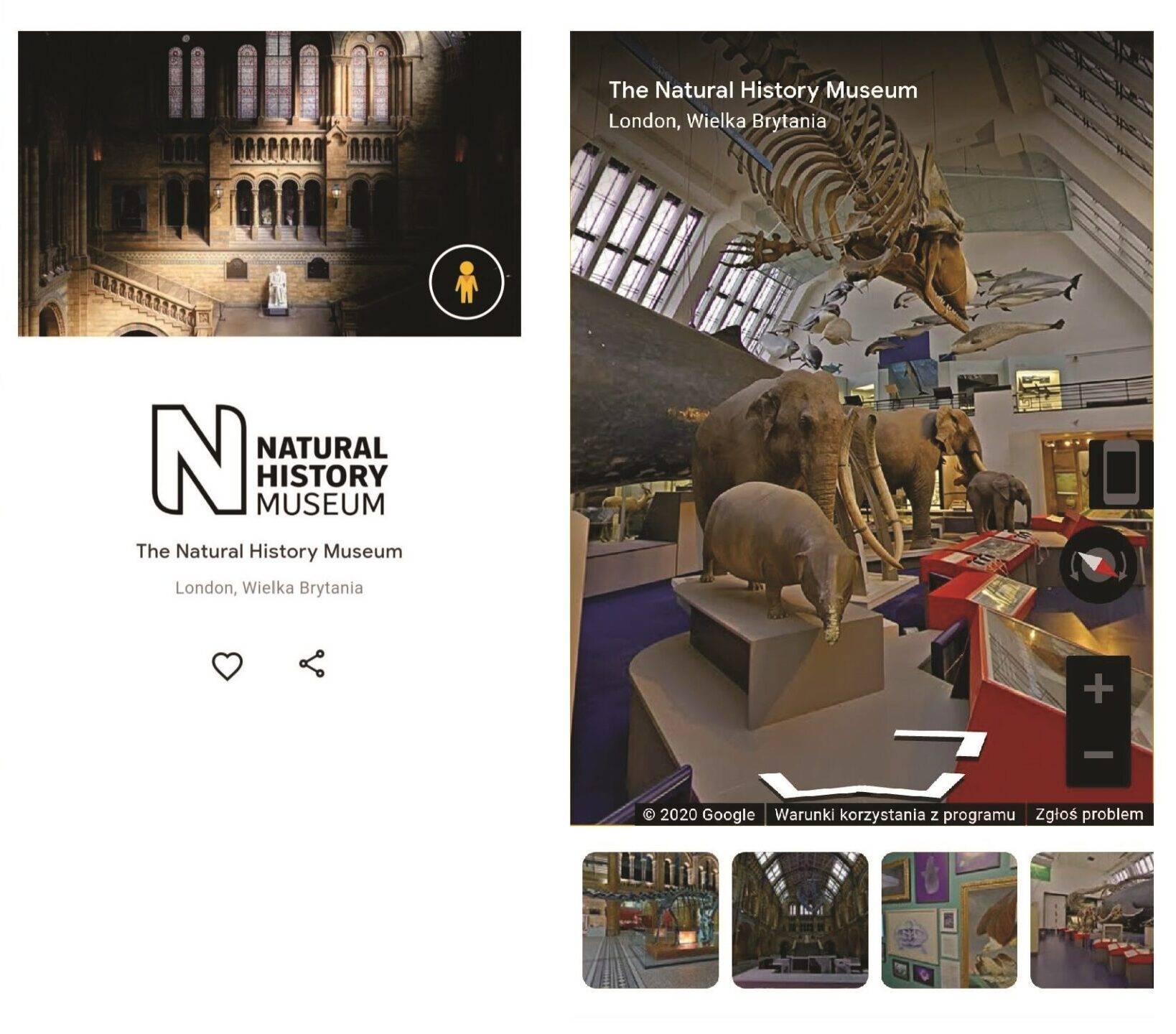 Profil Muzeum Historii Naturalnej w Londynie